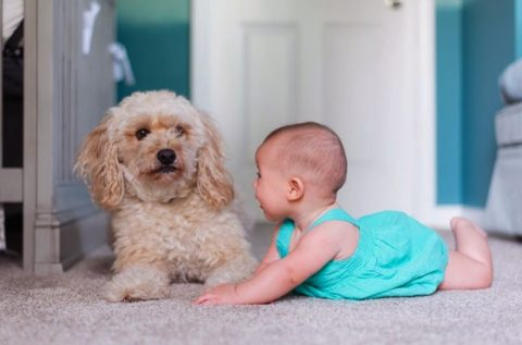 Child with a dog on carpet
