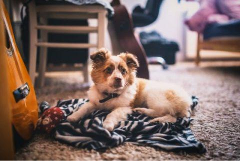 Dog sitting on the carpet